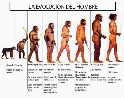 evolución hombre.png
