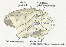 VÍAS VISUALES.