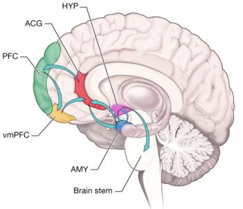 cerebro moral2.png